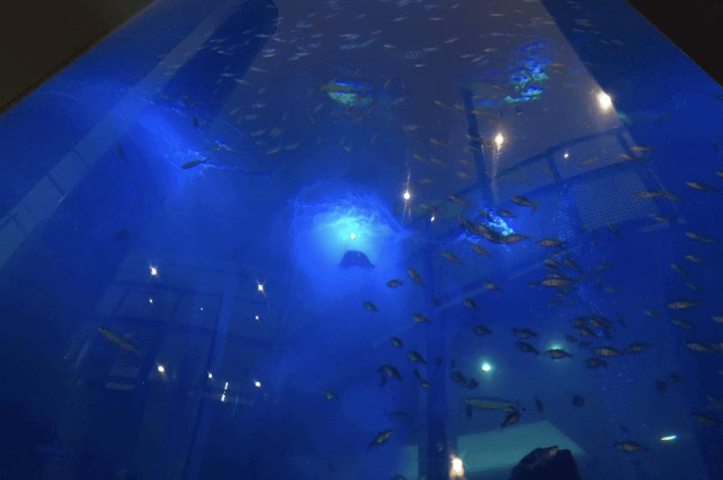 ベイサイドプレイス博多の巨大水槽