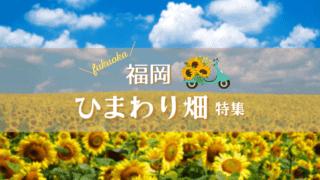 福岡 ひまわり畑