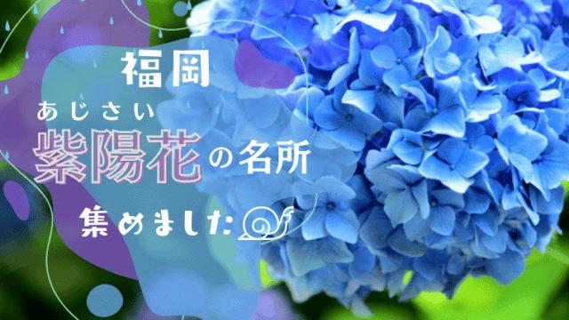 福岡 紫陽花